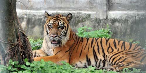Foto Kondisi Hewan Kebun Binatang Surabaya Memprihatinkan!