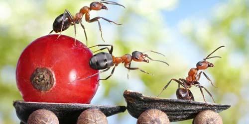 Uniknya Dunia Nyata Semut yang Terlihat Seperti di Film Animasi