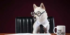 5 Persiapan untuk Mencari Kerja di 2013