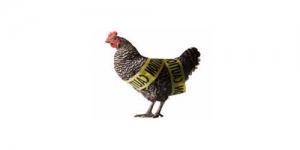 Virus Flu Burung H7N9 Kebal Obat