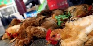 Waspada 'H7N9' Flu Burung Jenis Baru