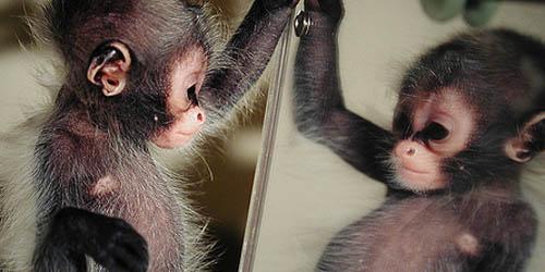 10-video-lucu-hewan-yang-takut-cermin.jpg