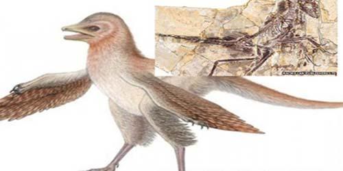 Ditemukan Fosil Nenek Moyang Burung