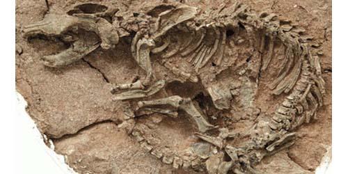 Ditemukan Kerangka Dinosaurus Terbesar di China!