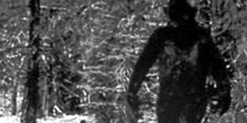 Hasil DNA Ungkap Monster 'Bigfoot' itu Nyata