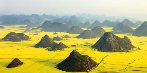 Ladang Rapa Negeri Ajaib dari China