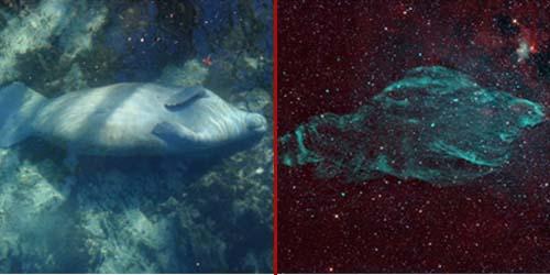 Penampakan Aneh di Ruang Angkasa, Nebula Berbentuk Sapi Laut