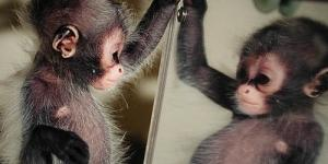 10 Video Lucu Hewan Yang Takut Cermin
