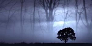 3 Pohon Menyeramkan di Dunia