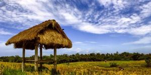 Kurang Gizi Menurun, Indonesia Terima Penghargaan FAO