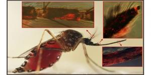 'Virus Dengue' Virus Mematikan Penyebab Nyamuk Semakin Haus Darah!