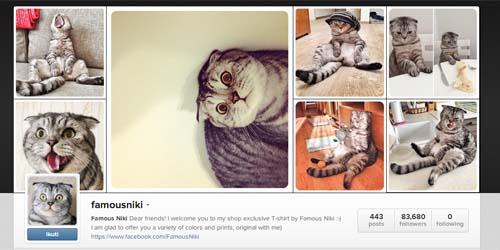 Niki, Kucing Paling Populer di Instagram