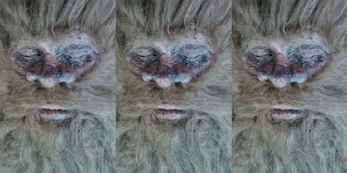 Ditembak Pemburu, Wajah Bigfoot Terungkap