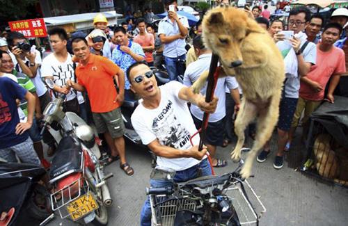 festival-sembelih-anjing