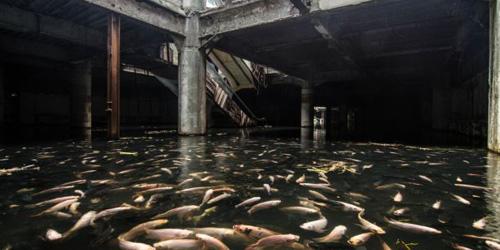 Terbengkalai, Mal di Bangkok Dihuni Ribuan Ikan Mas