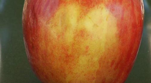 wajah-yesus-apel