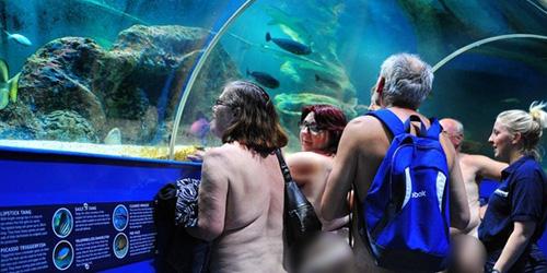 Rayakan Nudefest, Pengunjung Bugil Sambangi Wahana Akuarium