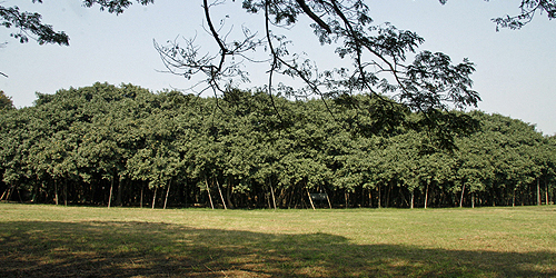 Image result for pohon beringin raksasa di india The Great Banyan Tree