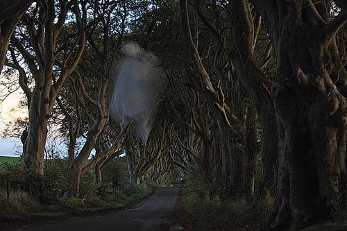 hantu Grey Lady Dark Hedges