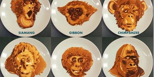 Heboh Video Kue Pancake Orangutan Karya Nathan Shields di Youtube