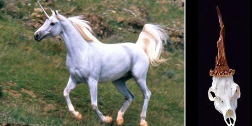 Tengkorak Unicorn Ditemukan di Slovenia
