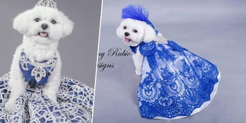 Bella mia, anjing paling tajir dapat warisan rp 19 miliar
