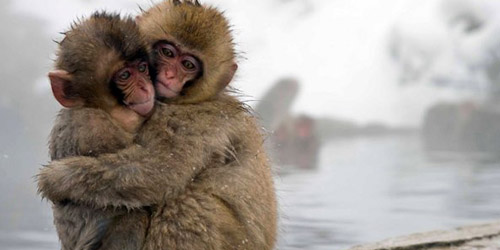 http://media.infospesial.net/image/p/2015/05/beri-nama-bayi-monyet-charlotte-bonbin-jepang-minta-maaf-f55c.jpg
