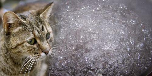 Pria Korea Rebus 600 Kucing Buat Campuran Obat