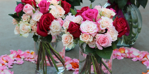 6 Macam Warna Bunga Mawar Beserta Maknanya