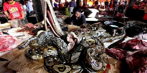 Pasar Tomohon Ngeri-ngeri Sedap, Daging Ular Rp 50 Ribu Sekilo