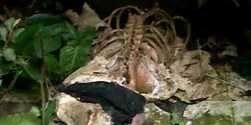 Arkeolog Temukan 3 Kerangka Misterius di Medan