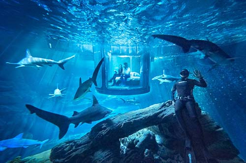 Keren, Tempat Tidur Ini Dikelilingi Ikan Hiu