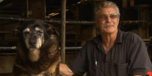Anjing Tertua 'Maggie' Mati di Umur 133 Tahun