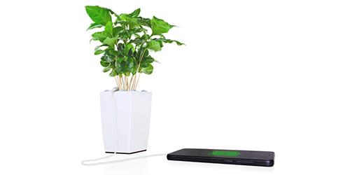 Bioo Lite, Charger yang Pakai Fotosintesis Sebagai Energi