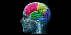 7 Latihan Ringan untuk Tingkatkan Kemampuan Otak Kamu