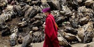 Di Tibet, Ada Tradisi Mayat jadi Santapan Burung Pemakan Bangkai