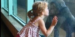 Kejadian Gadis 2 Tahun Cium Gorila