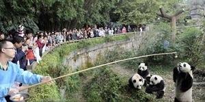 Kini Bisa Melihat Kebun Binatang dari Kamar dengan Google Street View