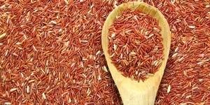 Manfaat Beras Merah Bagi Kesehatan Tubuh