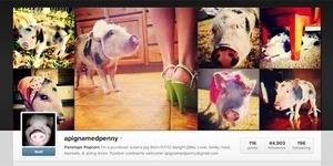 Penelope Popcorn, Babi Cantik yang Populer di Instagram