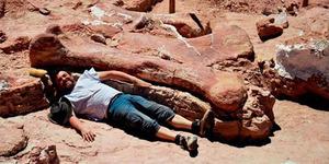 Fosil Dinosaurus Terbesar Setinggi 7 Lantai Ditemukan