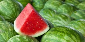 Melon Temahal Ini Laku Rp 284 Juta