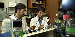 Ilmuwan AS Ciptakan Virus Flu Burung Baru Yang Mematikan