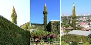 Keindahan Masjid Yesil Ivy di Turki yang Ditutupi Tumbuhan