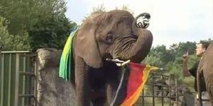 Prediksi Brasil vs Jerman: Ramalan Gajah Nelly Jerman Kalahkan Brasil