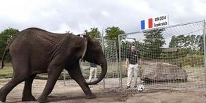Prediksi Prancis vs Jerman: Ramalan Gajah Nelly Jerman Kalahkan Prancis