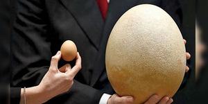 Telur Burung Gajah Terbesar di Dunia Dijual Rp 975 Juta