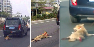 Foto Anjing Diseret Majikan di China Picu Kemarahan Netizen