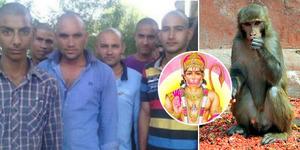 Kera Titisan Dewa Hanoman Mati, 200 Warga India Gundul Massal