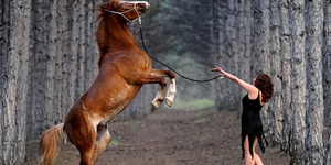 Dipuji Mirip Kuda, Penyair Saudi Ceraikan Istrinya
